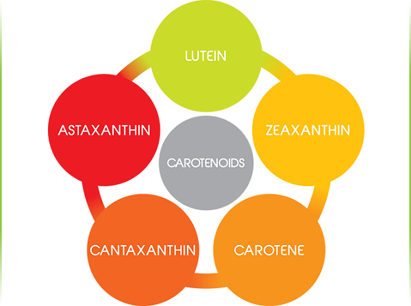 the health benefits of beta carotene Beta carotene is transformed in the body into vitamin a vitamin a benefits  include supporting the normal structure and function of epithelial cells.